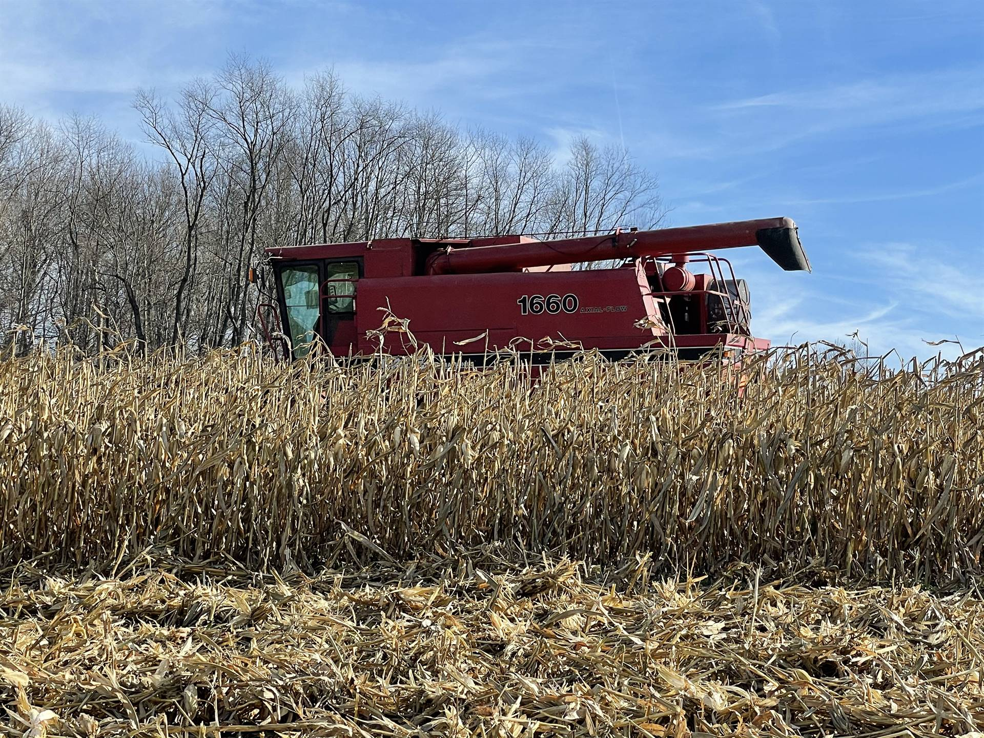 FFA Harvesting Corn at the school farm